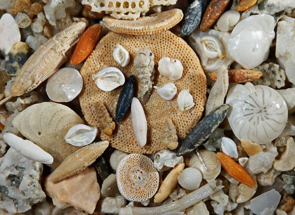 foraminifères-de-Madagascar