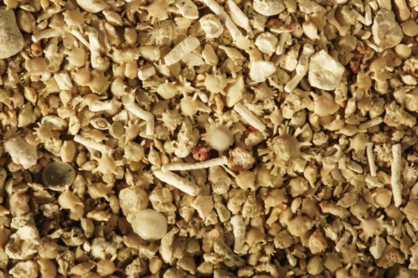 sable et foraminifères de Odlot