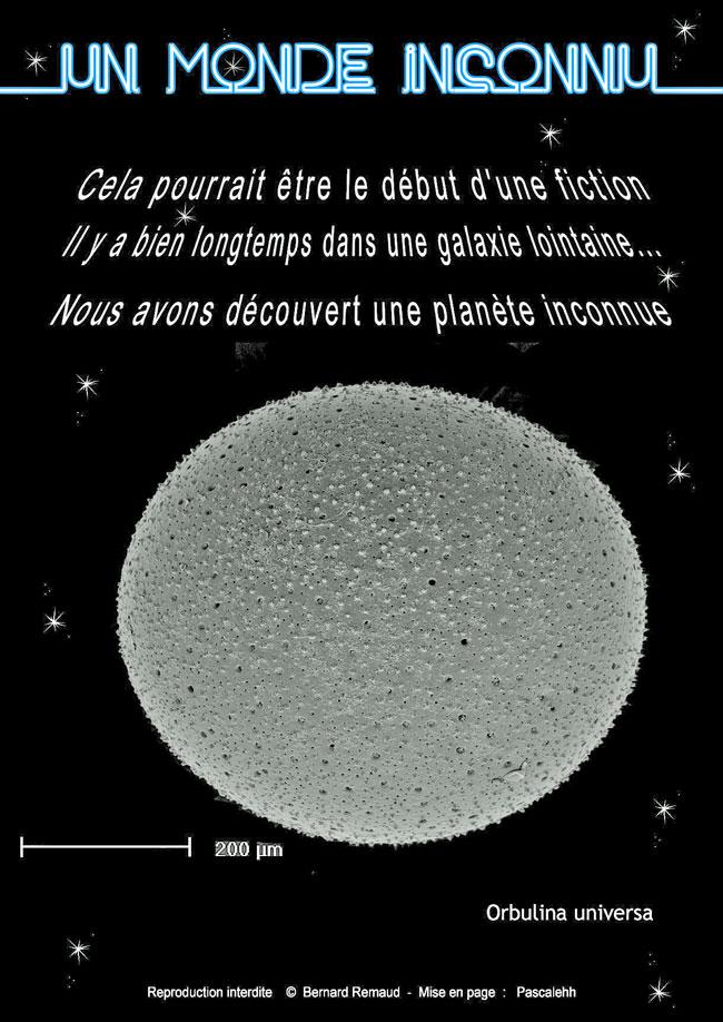Foraminifèra: Orbulina universa, un monde inconnu.